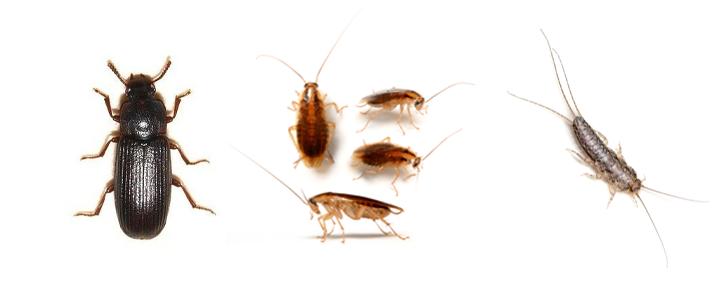 Vaktmester Andersen tilbyr bekjempelse av insekter